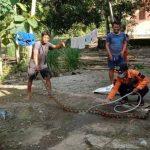 sang Induk Belum Ditemukan Belasan Ekor Anak Ular Piton Ditemukan di Rumah Warga di Makassar